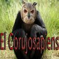 elcorujosapiens